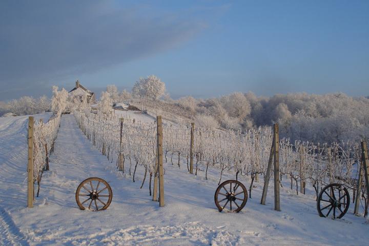 Poznati turistički aduti Bjelovarsko – bilogorske županije