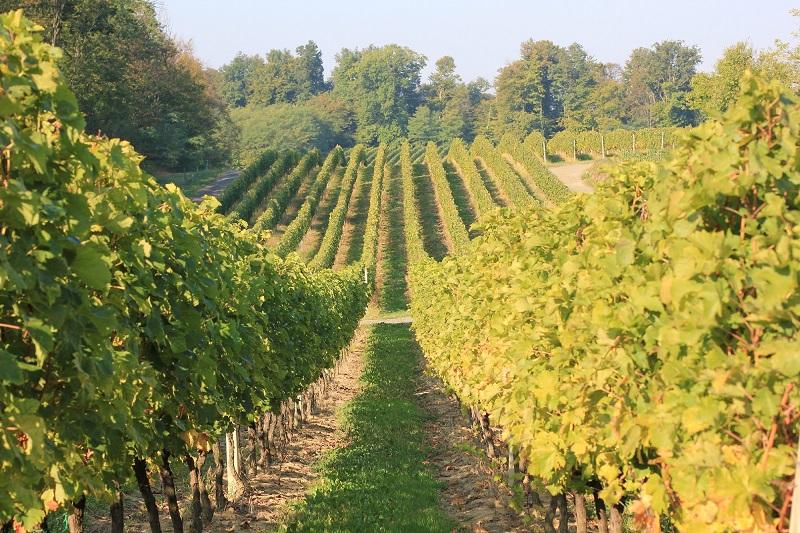 Moslavačka vinska cesta – krenimo najljepšom stazom Moslavine